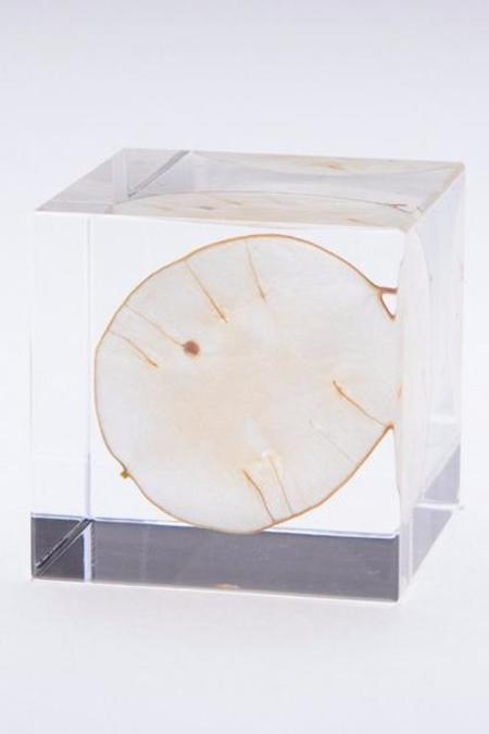 Usagi No Nedoko Sola Cube - Lunaria Annua