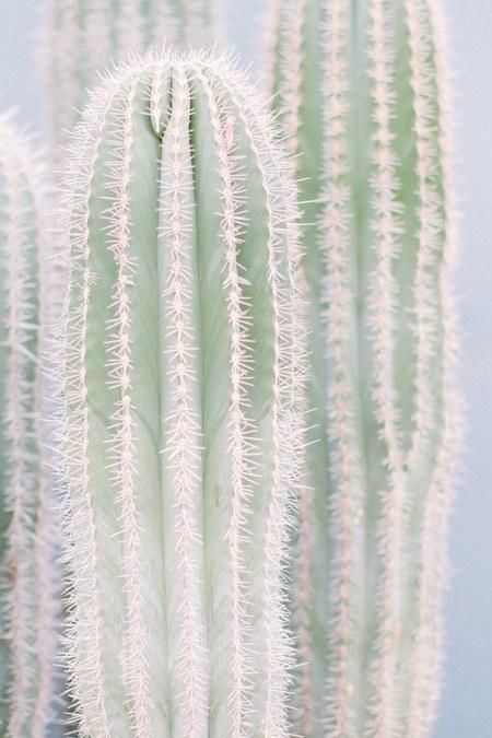 LOFT CREATIVE cactus print no. 17