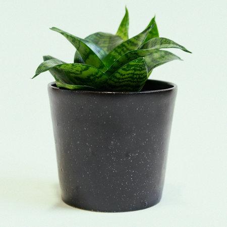 Lindsey Hampton Plant Pot - Black