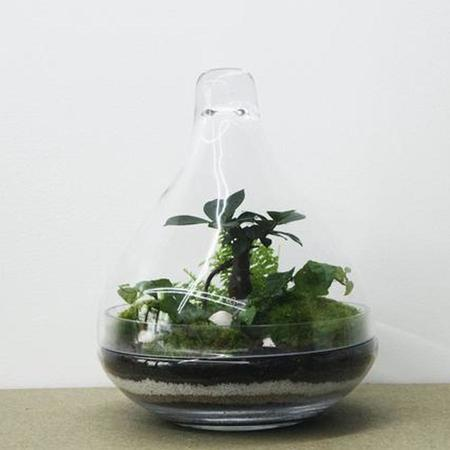 Green Factory Jungle Lab Ficus plant