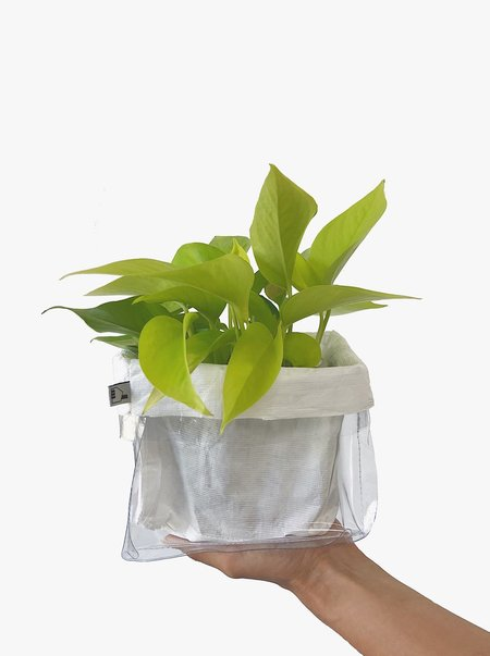 House of 950 Small Plant Bag - Clear