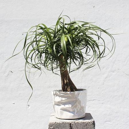 Wyatt Little Wrinkle Pot planter - White Pearl