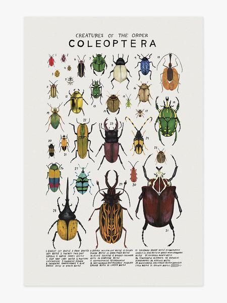 Kelsey Oseid Cockroach Species Poster