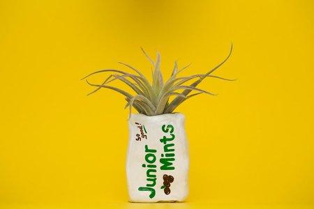 Hello Happy Plants JUNIOR MINTS PLANTER