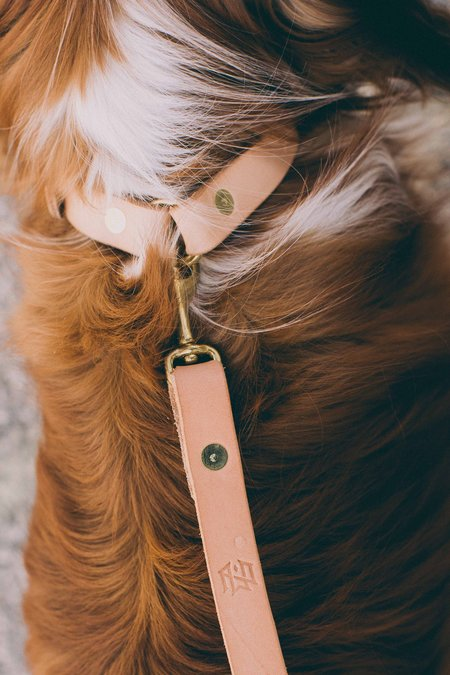 Noah Marion Slim Dog Collar