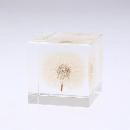 Usagi No Nedoko Sola Cube - Dandelion