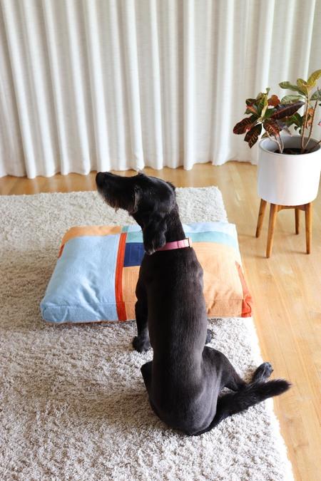 Dusen Dusen Landscape Dog Bed