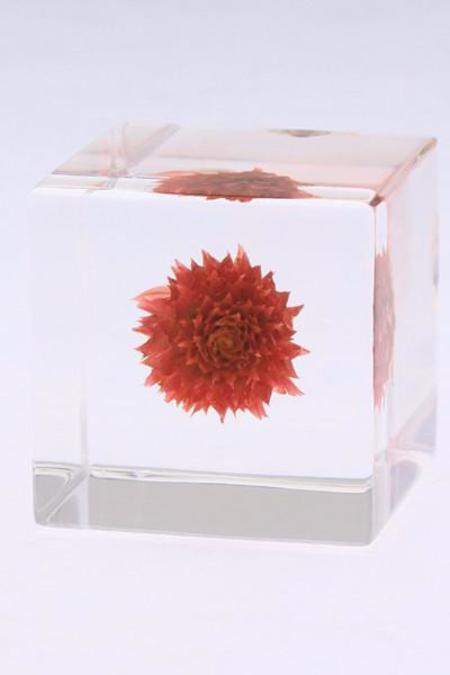 Usagi No Nedoko Sola Cube: Globe Amaranth