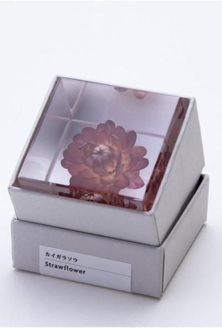 Usagi No Nedoko Sola Cubes: Strawflower