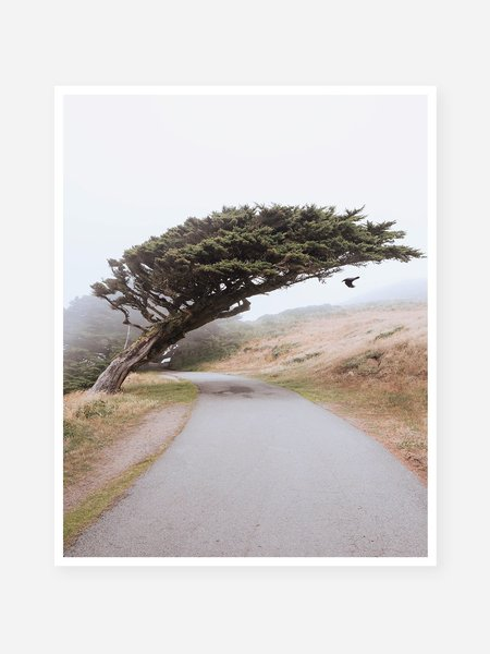 O.N.S Clothing Patric Phillips 'Shrouded in Fog' Art Print