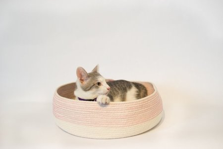 The Northern Market Cat Bed